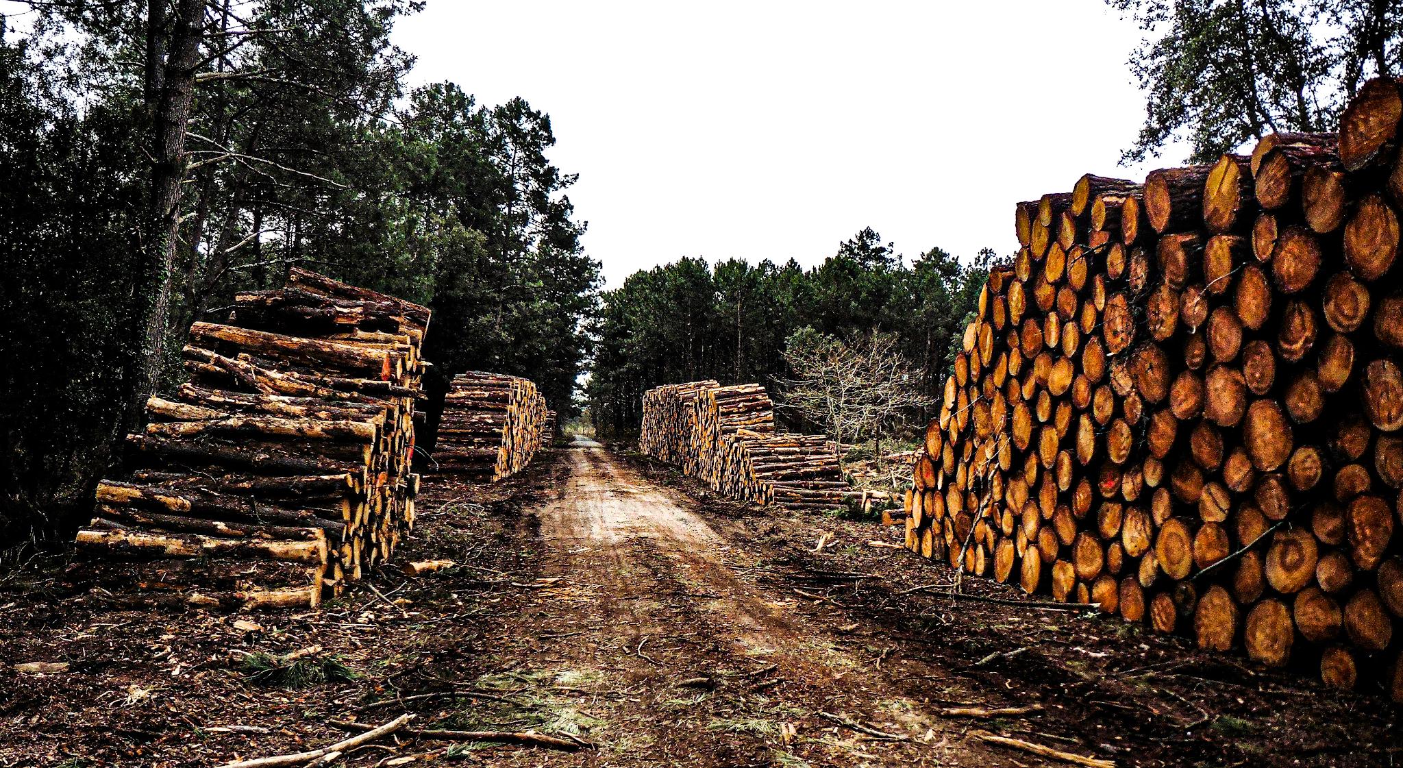 lumber racks | Speedrack West